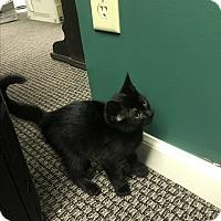 Adopt A Pet :: Blossom - Gainesville, GA