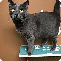Adopt A Pet :: Draco - Maryville, MO