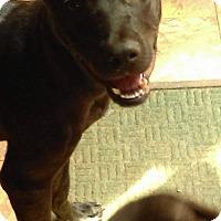 Adopt A Pet :: Zippy aka Tank - south plainfield, NJ