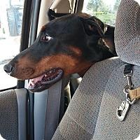 Adopt A Pet :: KOBY - Lloyd, FL