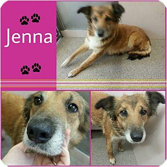Sheltie, Shetland Sheepdog Mix Dog for adoption in Louisburg, North Carolina - Jenna