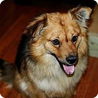 Adopt A Pet :: Harlan - Pocahontas, AR