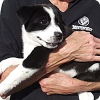 Adopt A Pet :: Lulu - Jackson, TN