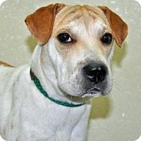 Adopt A Pet :: Gypsy - Port Washington, NY