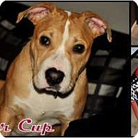 Adopt A Pet :: Ryder Cup - Toledo, OH