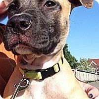 Adopt A Pet :: Riley - Oak Creek, WI