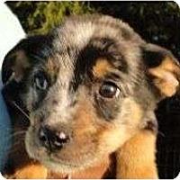 Adopt A Pet :: Marble - Plainfield, CT