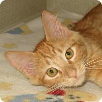 Adopt A Pet :: BRITTON - 2014 - Hamilton, NJ