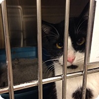 Adopt A Pet :: Spot - Muncie, IN