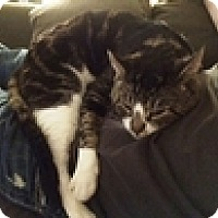 Adopt A Pet :: Kyosti - Vancouver, BC