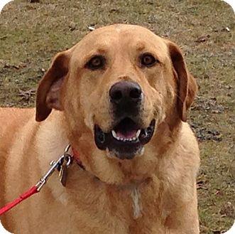 Labrador Retriever Mix Dog for adoption in Foster, Rhode Island - Duke