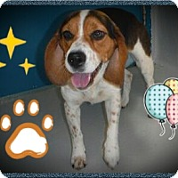 Adopt A Pet :: Holly - Northumberland, ON