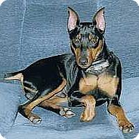 Adopt A Pet :: Derby - Syracuse, NY