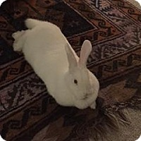 Adopt A Pet :: Reese - Conshohocken, PA