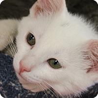 Adopt A Pet :: Lily - Medina, OH