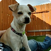 Adopt A Pet :: Dolly - Meridian, ID