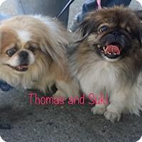 Adopt A Pet :: SUKI - SO CALIF, CA