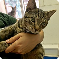 Adopt A Pet :: Almond Joy - Manteo, NC