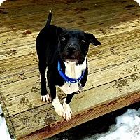 Adopt A Pet :: Farris - Adoption Pending! - Croydon, NH