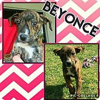 Adopt A Pet :: Beyonce - Scottsdale, AZ