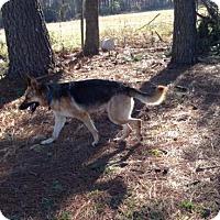 Adopt A Pet :: Sparta - Morrisville, NC