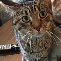 Adopt A Pet :: Dee Dee - Norwich, NY