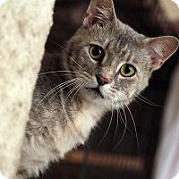 Adopt A Pet :: Rita - St. Louis, MO