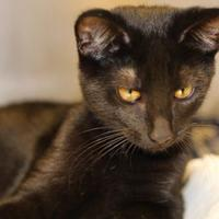 Adopt A Pet :: Frederick - Quincy, IL