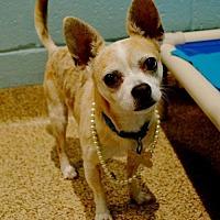 Adopt A Pet :: Java - Kennesaw, GA