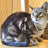 Adopt A Pet :: Stewy - Davis, CA