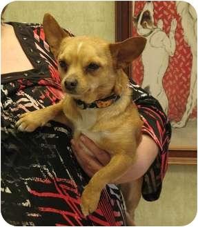 Chihuahua Dog for adoption in Kingwood, Texas - Nemo