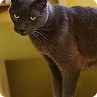 Adopt A Pet :: Marty - Redondo Beach, CA