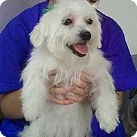 Adopt A Pet :: Saltine - Encinitas, CA