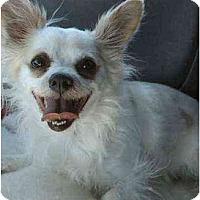 Adopt A Pet :: Oliver - Gilbert, AZ