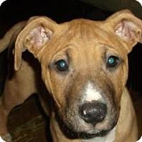 Adopt A Pet :: Peebles - Cincinnati, OH