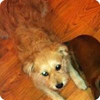 Adopt A Pet :: Biscuit - Canoga Park, CA
