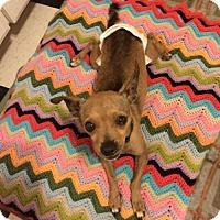Adopt A Pet :: Wonky Sophia - Vista, CA