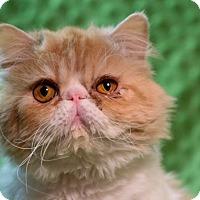 Adopt A Pet :: Prince Versace - Columbus, OH