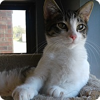 Adopt A Pet :: Lenny - Lake Charles, LA