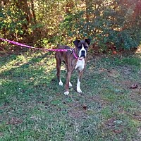 Adopt A Pet :: Taffy - Wilmington, NC