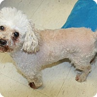 Adopt A Pet :: Fifi - Sparta, NJ