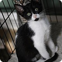 Adopt A Pet :: Demi - Baton Rouge, LA