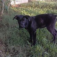 Adopt A Pet :: Jenny - Manchester, TN