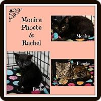 Adopt A Pet :: Monica Phoebe & Rachel - Marietta, OH