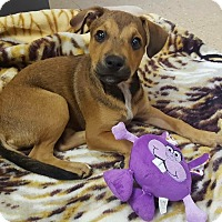 Adopt A Pet :: Peaches - Colonial Heights, VA