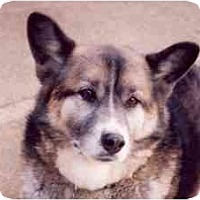 Adopt A Pet :: Wolfy - Belleville, MI