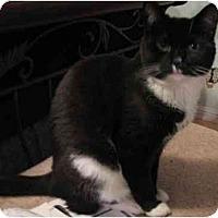 Adopt A Pet :: Jac - Davis, CA