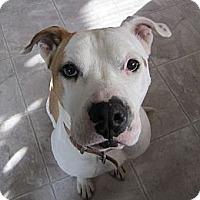 Adopt A Pet :: Cooper - Medicine Hat, AB