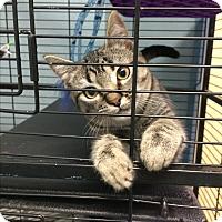Adopt A Pet :: Glenn Stefani - Richboro, PA
