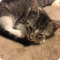 Adopt A Pet :: Sailor - Weatherford, TX
